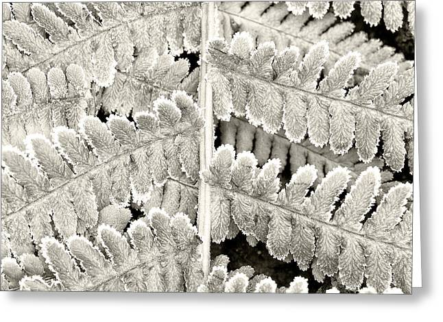 Close Up Greeting Cards - Frosty Fern Greeting Card by Janet Burdon