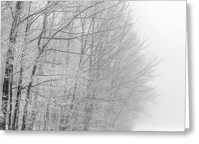 Crisp Greeting Cards - Frosty Forest Frontier Greeting Card by Chris Bordeleau