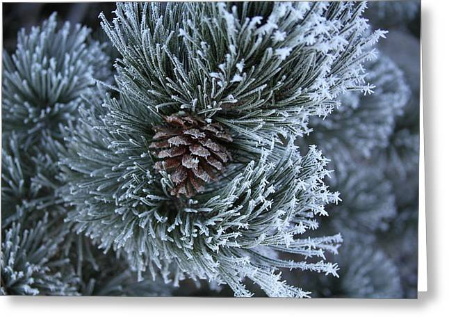 Fort Collins Greeting Cards - Frosty Fort Collins Morning Greeting Card by Michael Gourley