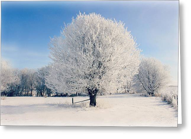 Christmas Greeting Greeting Cards - Frosty Glow Greeting Card by Julie Hamilton