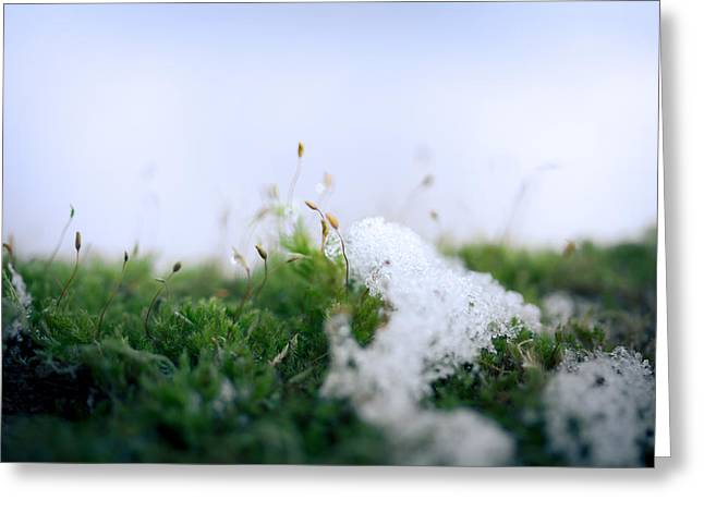 Spore Greeting Cards - Frosty In The Land Of Small Greeting Card by Shane Holsclaw