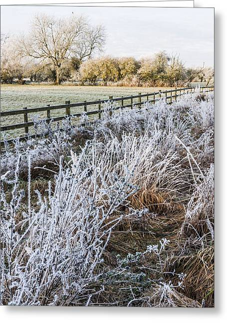 Milton Keynes Greeting Cards - Frosty landscape Greeting Card by David Isaacson