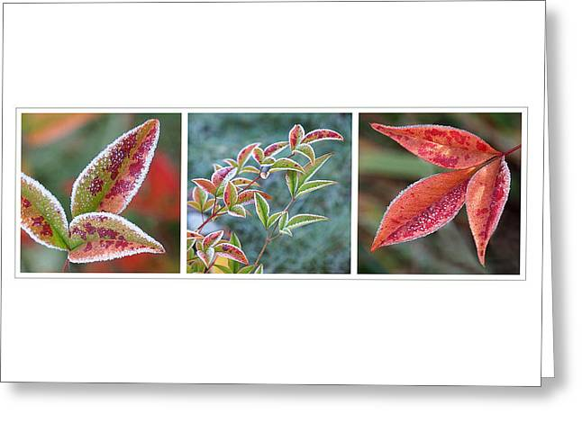 Interior Scene Photographs Greeting Cards - Frosty Leaves Greeting Card by Gill Billington