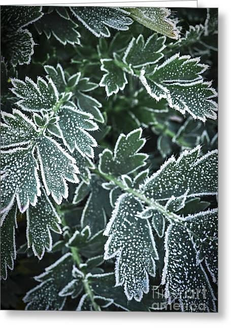 Winter Park Greeting Cards - Frosty leaves in late fall Greeting Card by Elena Elisseeva