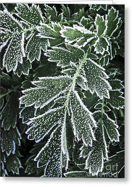 Floral Structure Greeting Cards - Frosty leaves macro Greeting Card by Elena Elisseeva