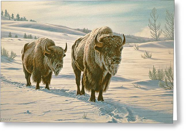Bison Paintings Greeting Cards - Frosty Morning - Buffalo Greeting Card by Paul Krapf