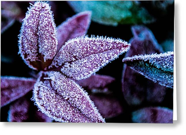 Mick Anderson Greeting Cards - Frosty Morning Greeting Card by Mick Anderson