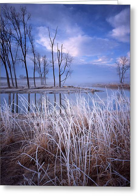 Hack-ma-tack National Wildlife Refuge Greeting Cards - Frosty Morning Greeting Card by Ray Mathis