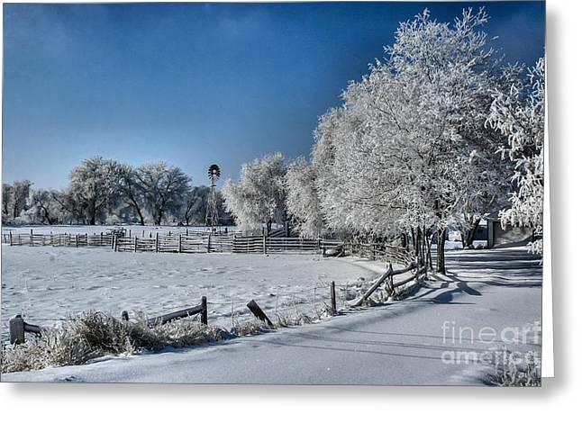 Snow-covered Landscape Greeting Cards - Frosty Morning Greeting Card by Steven Reed