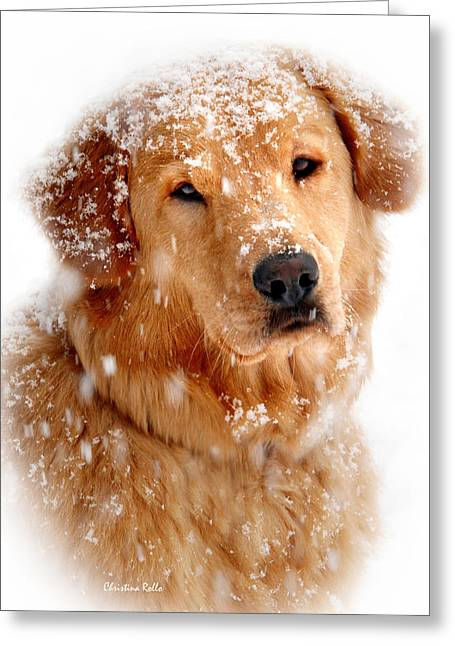 Dog Prints Photographs Greeting Cards - Frosty Mug Greeting Card by Christina Rollo