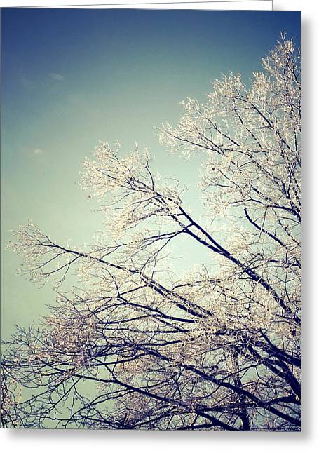 Bare Trees Greeting Cards - Frosty Pastels Greeting Card by Natasha Marco