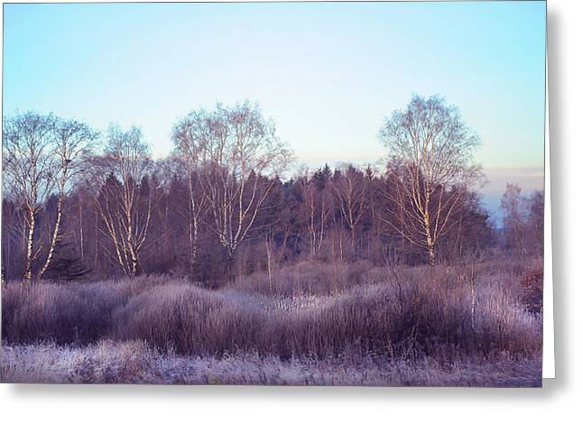Lamdscape Greeting Cards - Frosty Purple Morning in Russia Greeting Card by Jenny Rainbow