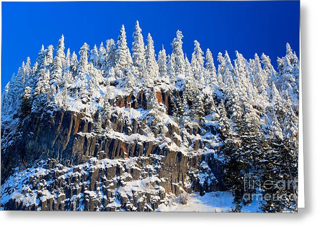 Hike Greeting Cards - Frosty Trees Greeting Card by Inge Johnsson