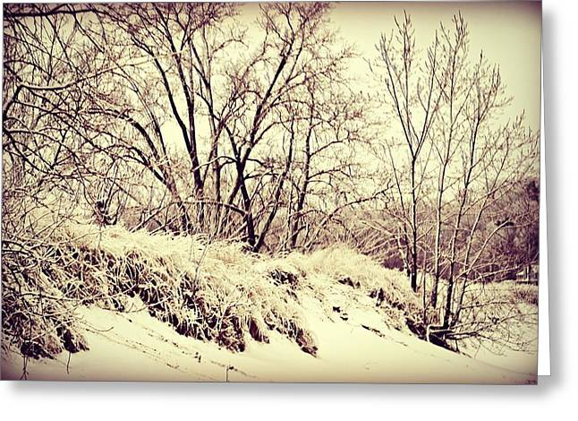 Recently Sold -  - Beach Greeting Cards - Frozen Beach Greeting Card by Dawdy Imagery
