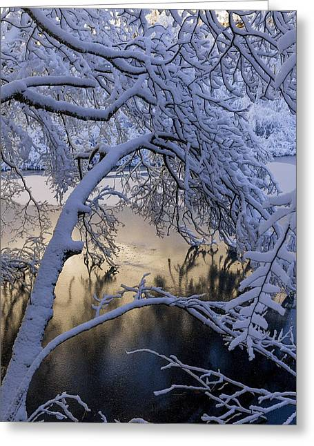 Snow-covered Landscape Greeting Cards - Frozen Branch Greeting Card by Evgeny Govorov
