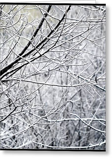 Winter Images Greeting Cards - Frozen Branches Greeting Card by Bonnie Bruno