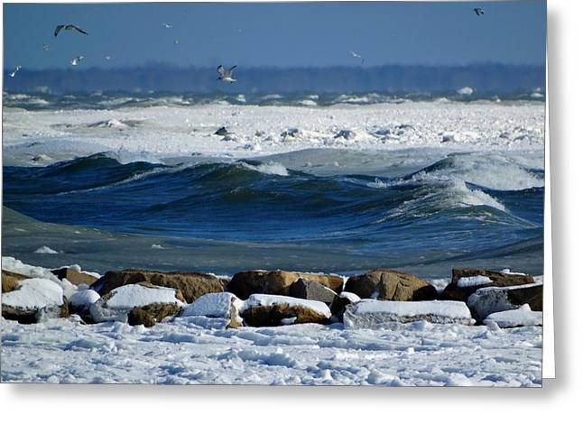 Harbor Sesuit Harbor Greeting Cards - Frozen Coastline Greeting Card by Dianne Cowen
