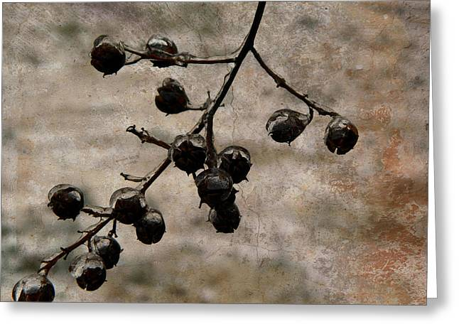 Winter Storm Greeting Cards - Frozen Crepe Myrtle Pods Greeting Card by Kathy Barney