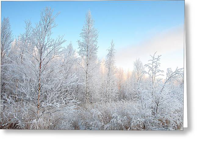 Frozen December Greeting Card by Ari Salmela