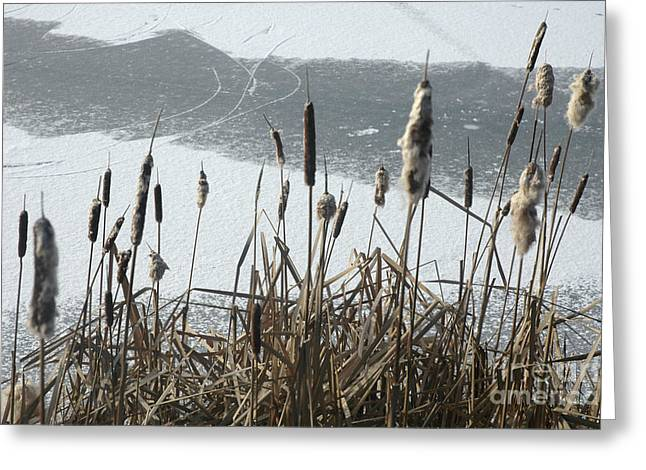 Distaff Greeting Cards - Frozen Distaff at Chelsea Greeting Card by Andre Paquin