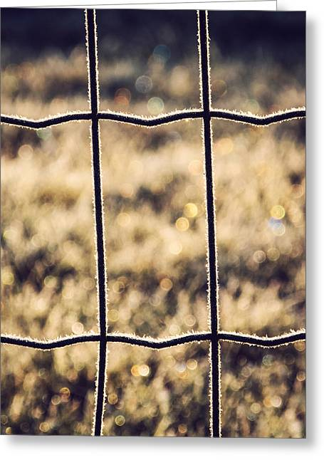 Morning Dew Greeting Cards - Frozen Fence Greeting Card by Wim Lanclus