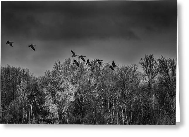 Flock Of Geese Greeting Cards - Frozen Flight Greeting Card by Thomas Young