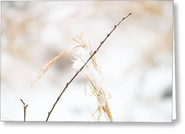 Tone On Tone Greeting Cards - Frozen Grass and Twig Greeting Card by David Waldo