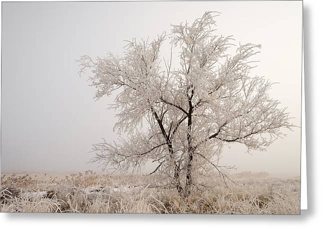Inversion Greeting Cards - Frozen Ground Greeting Card by Chad Dutson