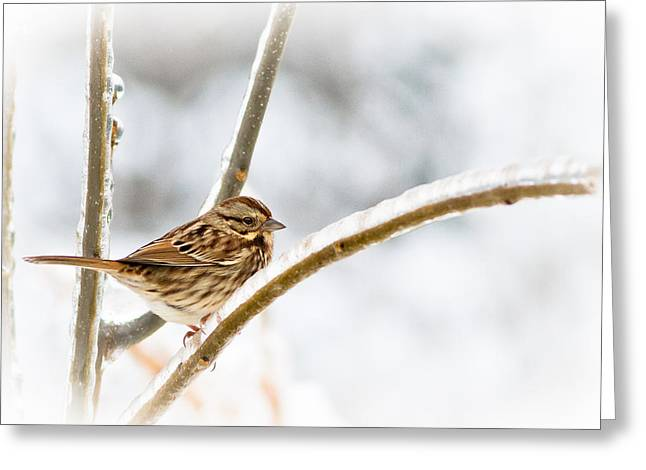 Birds On A Branch Greeting Cards - Frozen In Time Greeting Card by Annette Hugen