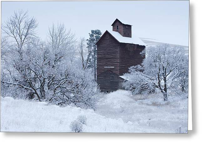Frozen In Time Greeting Card by Darren  White
