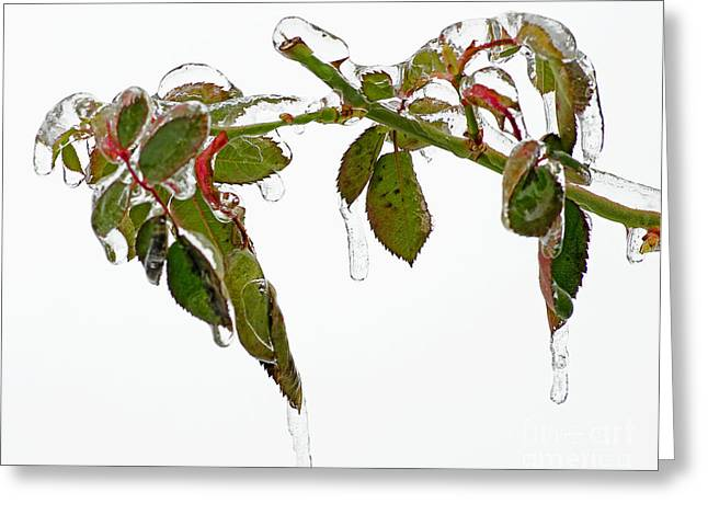 Dripping Rose Greeting Cards - Frozen In Time Greeting Card by Nick  Boren