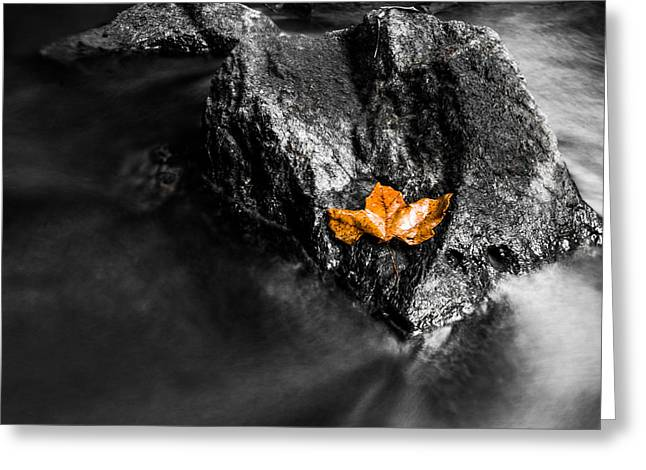 Autumn Leaf On Water Greeting Cards - Frozen in Time Greeting Card by Shelby  Young