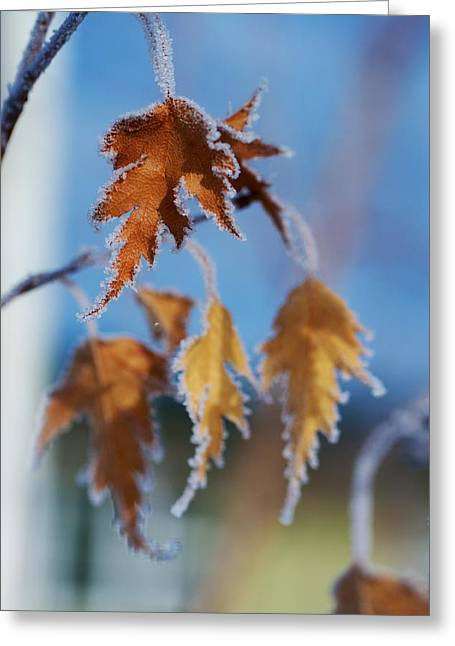 Winter Prints Greeting Cards - Frozen Greeting Card by Kevin Bone