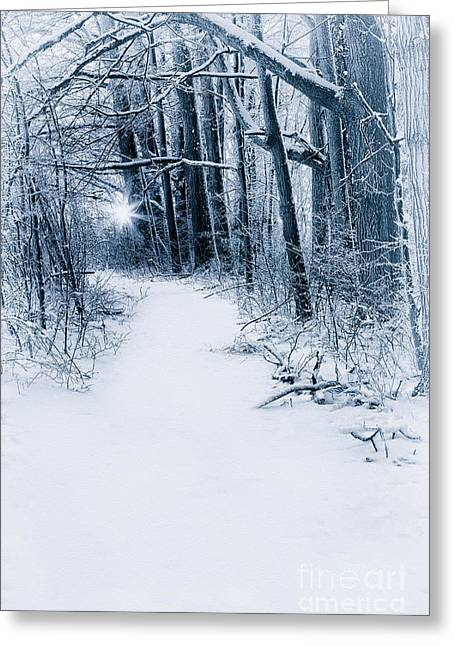 Winter Photos Greeting Cards - Frozen land Greeting Card by Todd Bielby