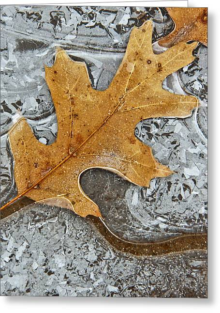 Cory Photography Greeting Cards - Frozen Leaf #1 Greeting Card by Tom and Pat Cory