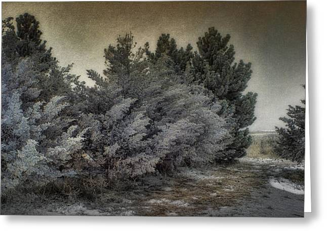 Nature Scene Digital Art Greeting Cards - Frozen November Day Greeting Card by Ellen Heaverlo