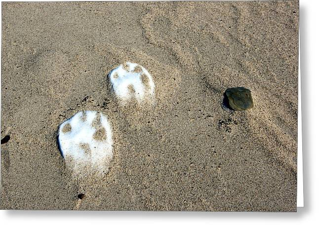 Paw Print Greeting Cards - Frozen Paw Prints Greeting Card by Jackie Novak
