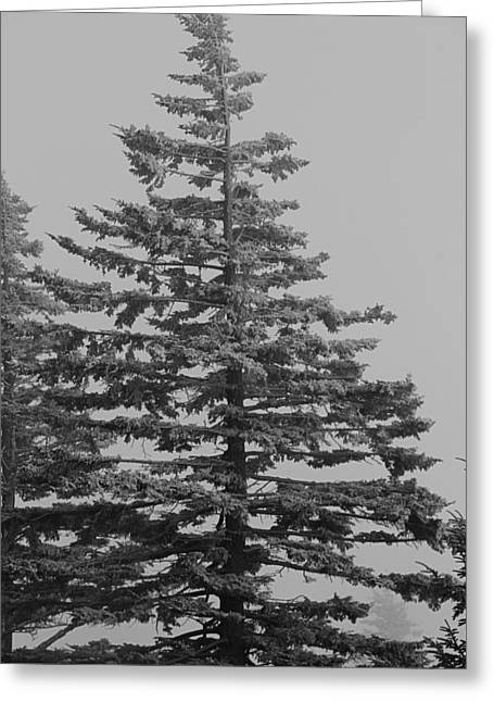 Frozen Pine Greeting Card by Dan Sproul