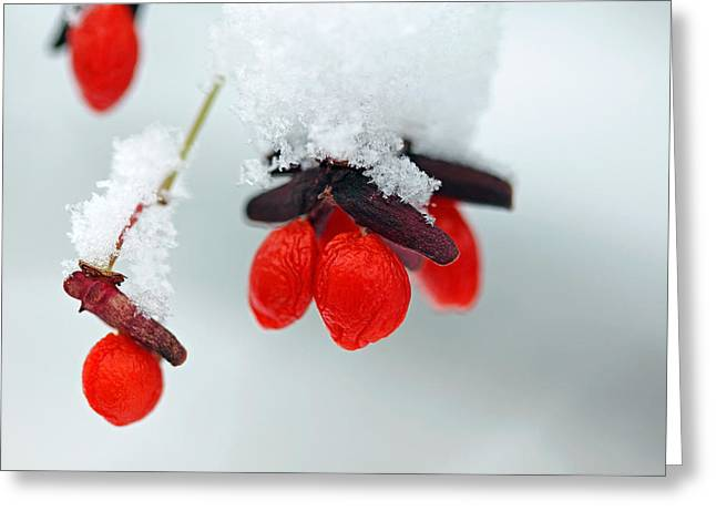 Capsule Greeting Cards - Frozen Red Fruit Greeting Card by Debbie Oppermann