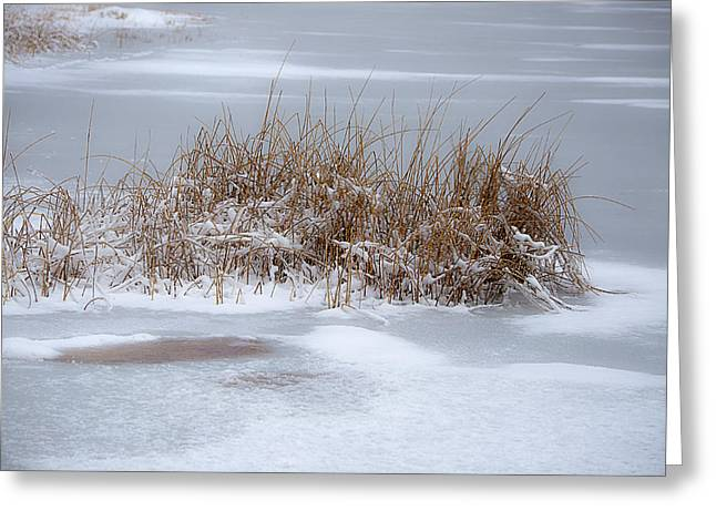 Snow Scene Landscape Greeting Cards - Frozen Reeds Greeting Card by Julie Palencia