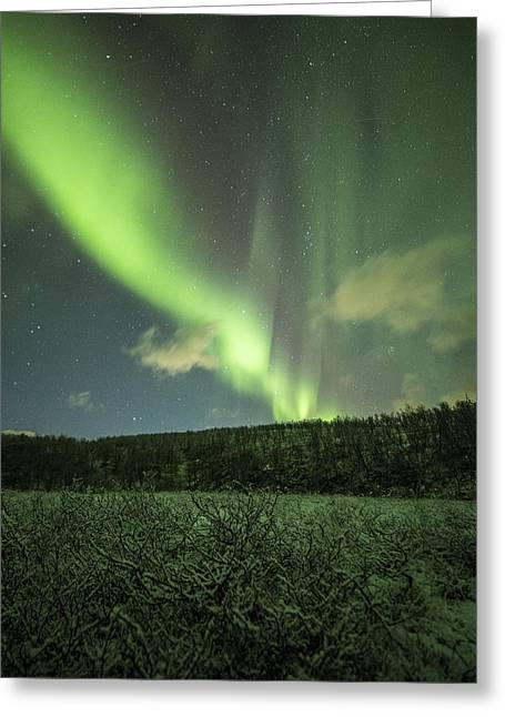 Winter Night Greeting Cards - Frozen Greeting Card by Ronny Aarbekk