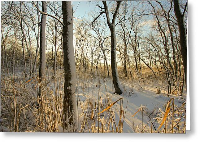 Indiana Photography Greeting Cards - Frozen Swamp at Golden Hour Greeting Card by Jackie Novak