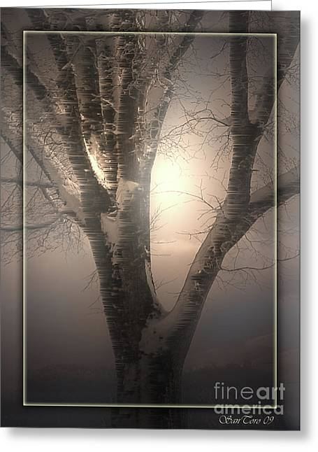 Coldly Greeting Cards - Frozen Tree Greeting Card by Bruno Santoro
