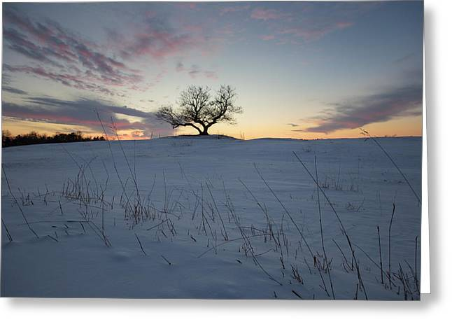 Canon Eos 6d Greeting Cards - Frozen Tree of Wisdom Greeting Card by Aaron J Groen