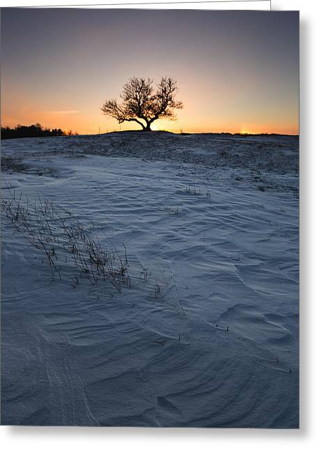 Lone Greeting Cards - Frozen Tree of Wisdom Greeting Card by Aaron J Groen