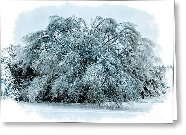 Winter Photos Greeting Cards - Frozen tree Greeting Card by Todd Bielby