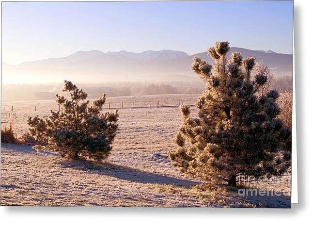 Foggy Day Greeting Cards - Frozen trees in the winter Greeting Card by Michal Bednarek