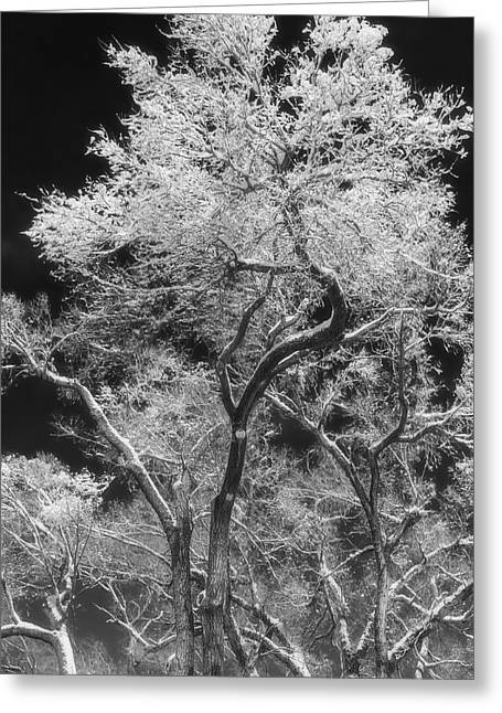 Chalco Hills Recreation Area Greeting Cards - Frozen Trees Greeting Card by Jeff Swanson