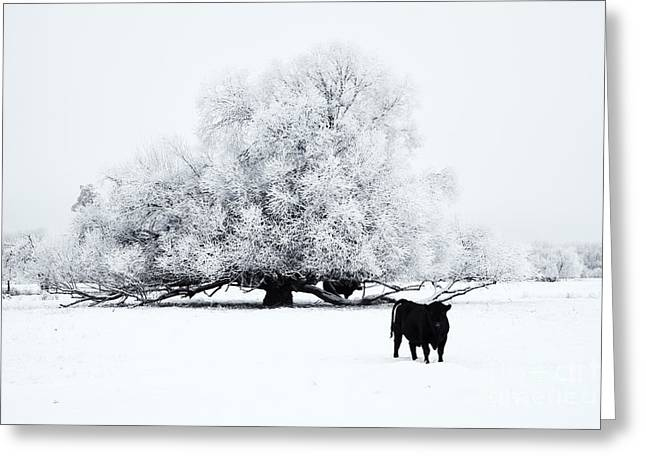 Angus Greeting Cards - Frozen World Greeting Card by Mike  Dawson