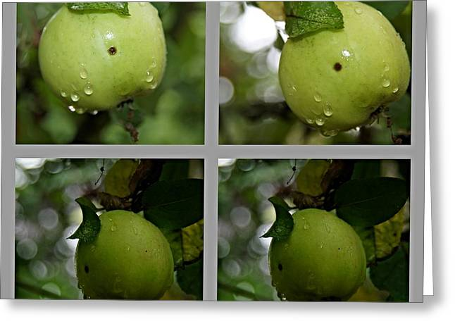 Fenster Greeting Cards - Frucht  Greeting Card by Klaas Hartz